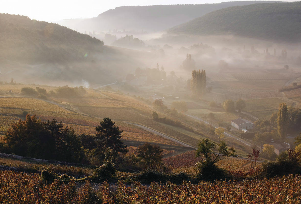 Village de la Côte de Beaune : Saint-Romain dans la brume. Photo: BIVB / JOLY M.