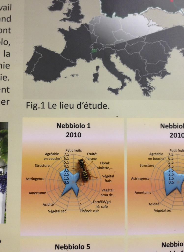 A wasp takes a closer look at Arnad Montjovet's Nebbiolo aromas.