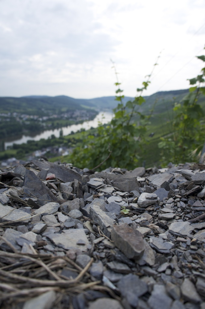 Piles of blue slate in the Graacher Himmelreich vineyard. Mosel Valley, Germany.